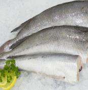 hake fish