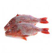 red-bream-fish