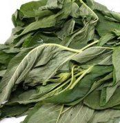 Fresh tete green biteku-teku leaves