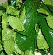 ugu-leaf-1280x720